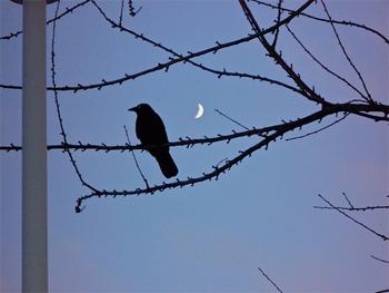 Eighth House Moon
